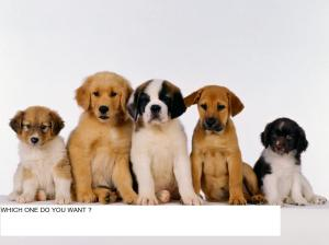 free-dogs-pictures-3