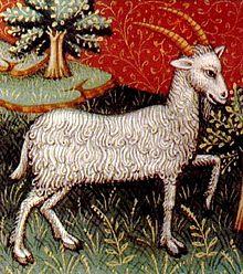 Capricorn - The Sea Goat