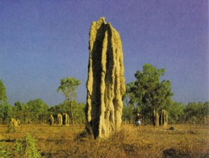 termite tower